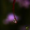 <p>Rain Drop</p>