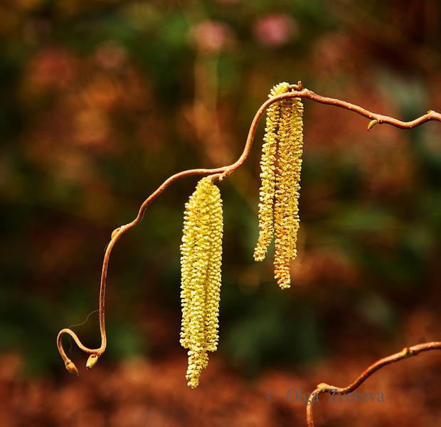 <p>Spring at Washington Park Arboretum, Seattle, Washington, USA</p>