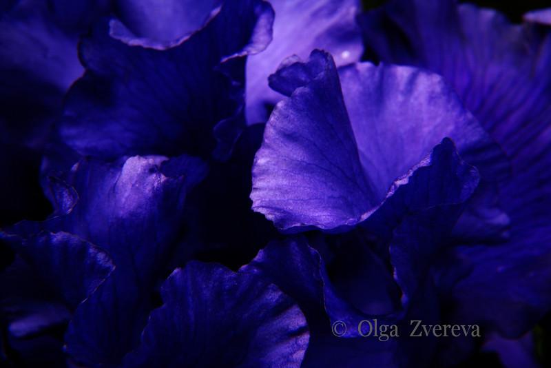 <p>Iris details study.</p>