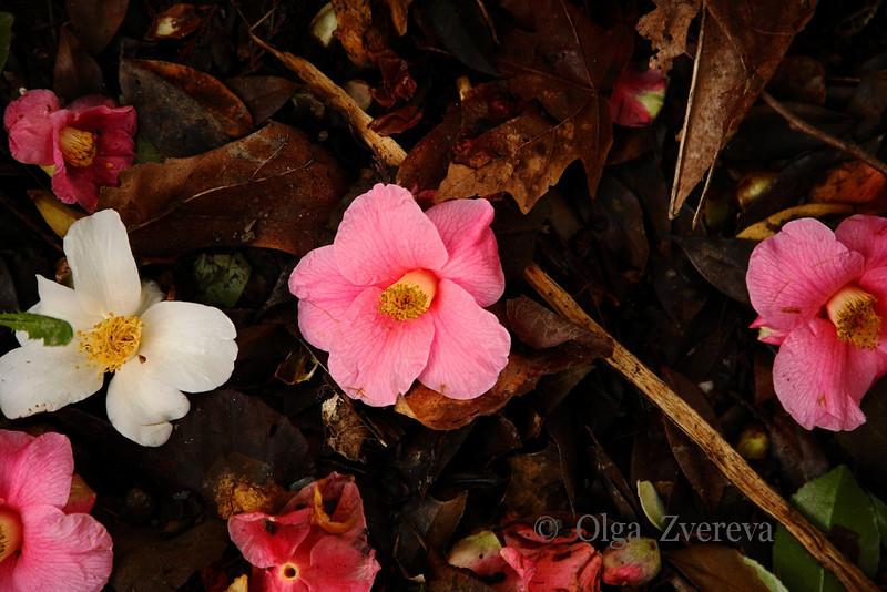"""<p>""""... A time to die...""""  Washington Park Arboretum, Seattle, Washington, USA</p>"""