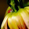 <p>Ladybug</p>