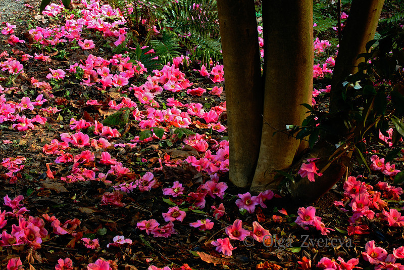 <p>Flower bed. Washington Park Arboretum, Seattle, Washington, USA</p>