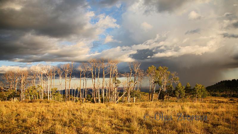 <p>Aspens in storm light, Scenic Byway 12, Utah, USA</p>