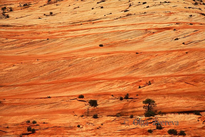 <p>Sandstone Terraces, Zion National Park, Utah, USA</p>