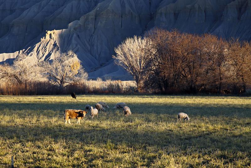 <p>Utah, USA</p>