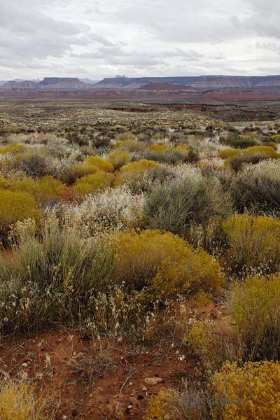 <p>Desert, Utah, USA</p>