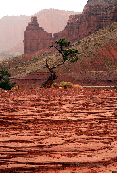 <p>Rainy Morning at Capitol Reef National Park, Utah, USA</p>