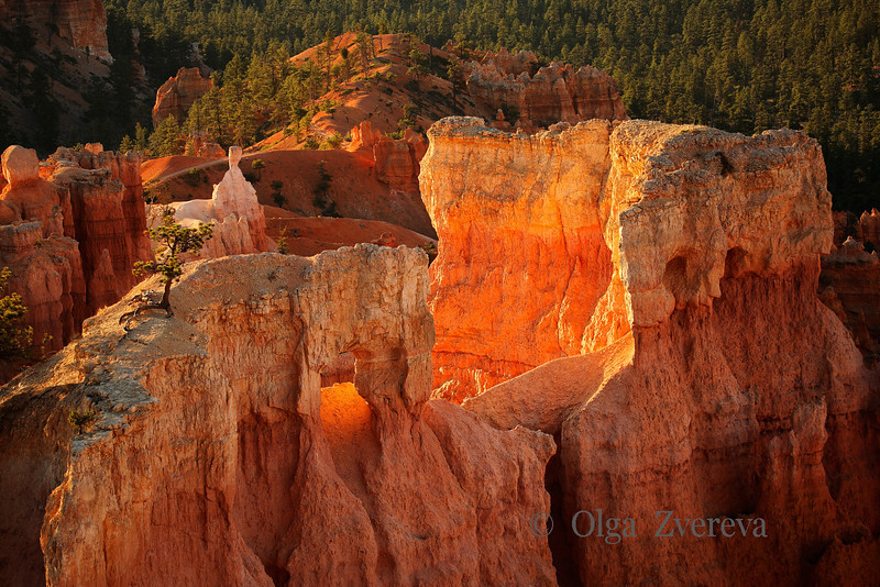 <p>The Wall, Bryce Canyon National Park, Utah, USA</p>