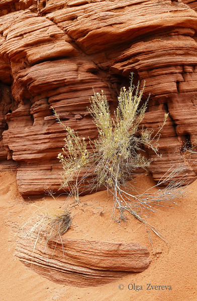 <p>Sandstone formation, Utah, USA.</p>