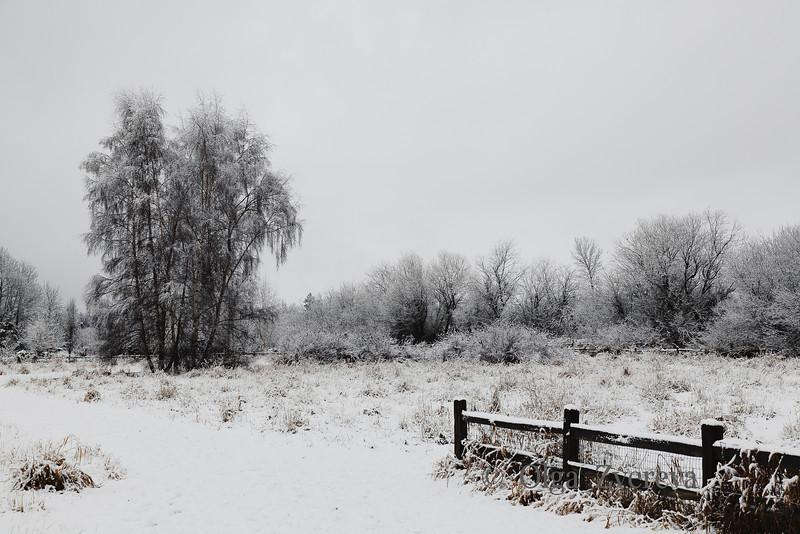 <p>Snow Day at Marymoor Park, Redmond, Washington, USA</p>