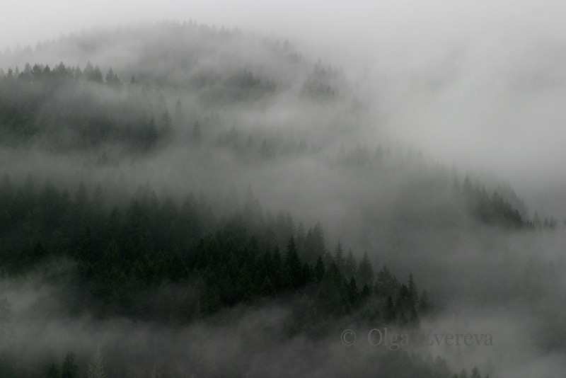 <p>Mountain Magic. Fog at North Cascades National Park, Washington, USA</p>