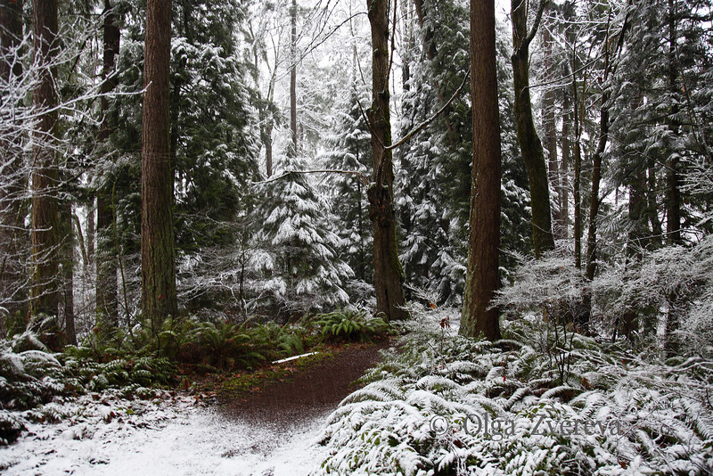 <p>Snow at Redmond, Washington, USA</p>