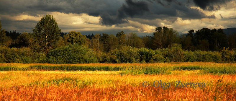 <p>Storm Light. Grass field and trees illuminated by the storm light, Redmond, Washington, USA</p>