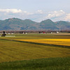 <p>Skagit Valley, Washington, USA</p>