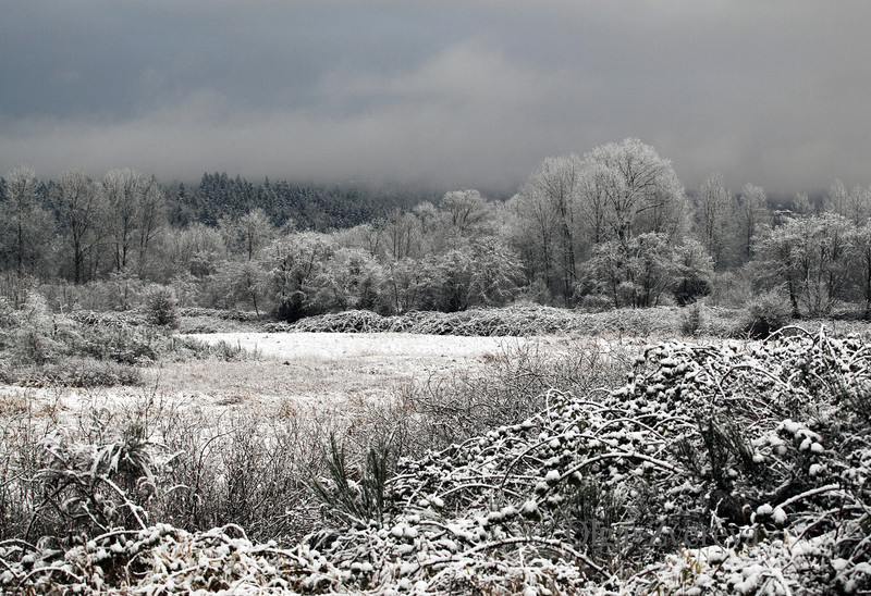 <p>Evening after snow storm at Redmond, Washington, USA</p>