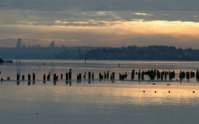 <p>Evening at Lake Washington, Kirkland, Washington, USA</p>