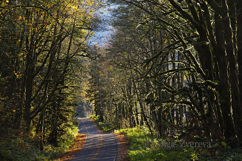 <p>Forest road. Washington, USA</p>