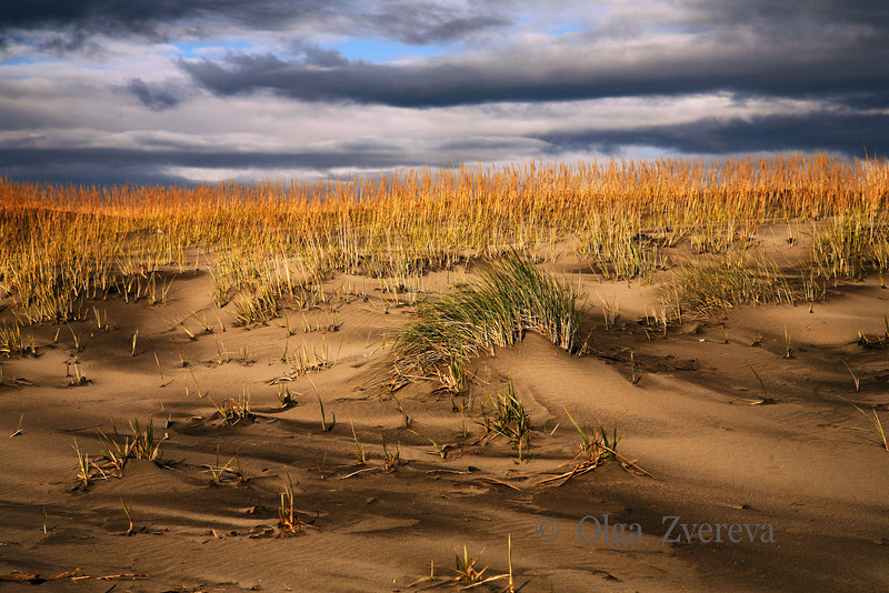 <p>Windy day on the beach, Ocean Shore, Washington, USA</p>