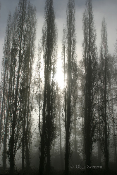 <p>Morning at Marymoor Park, Redmond, Washington, USA</p>