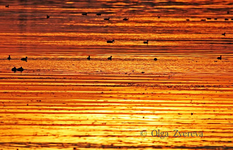 <p>Sunset light is reflected on the water of Lake Washington, Kirkland, Washington, USA</p>