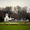<p>Swans on the field in the front of church. Skagit Valley, Washington, USA</p>