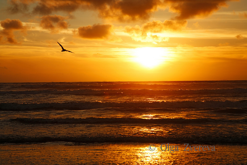 <p>Sunset over Pacific Ocean, Washington, USA</p>