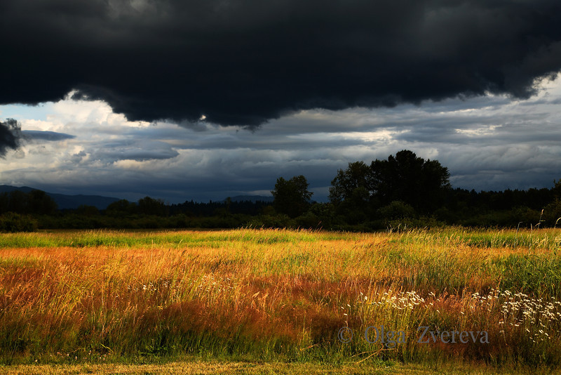 <p>Storm Light. Grass field illuminated by the storm light, Redmond, Washington, USA</p>