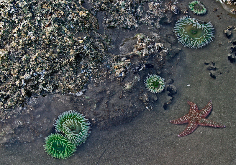 <p>Tide pool, Ruby Beach, Olympic National Park, Washington, USA</p>