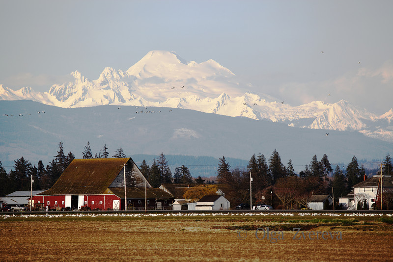 <p>Mount Baker View from Skagit Valley, Washington, USA</p>