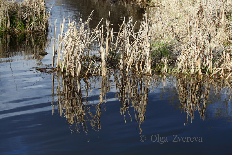 <p>Spring reflection. Lake Washington, Kirkland, Washington, USA</p>