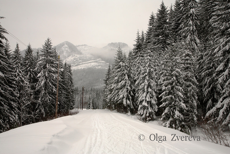 <p>Ski tracks. Snoqualmie Pass in the Cascade Mountains of Washington, USA</p>
