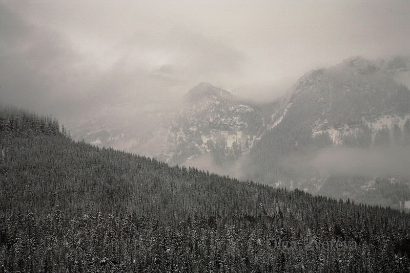 <p>Foggy day at Snoqualmie Pass in the Cascade Mountains of Washington, USA</p>