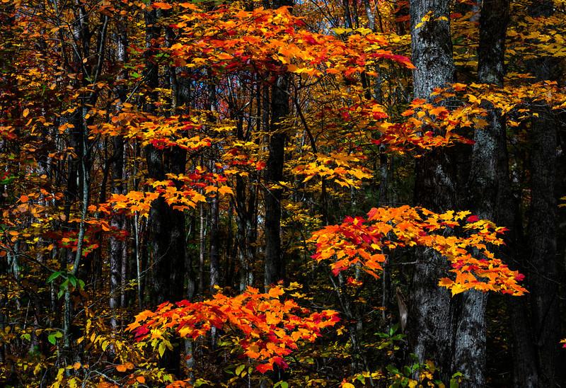 Fall Color; Hiawatha NF