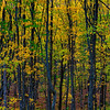 Forest Color, Hiawatha National Forest
