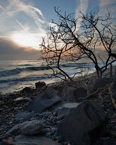 Lonely Tree - Carlsbad State Beach, CA