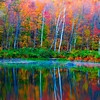 Bakersfield Pond Reflection