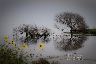 Trees at Bolsa Chica Reserve - CA