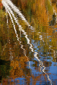 Reflecting Birch at Canaan Street Lake - New Hampshire