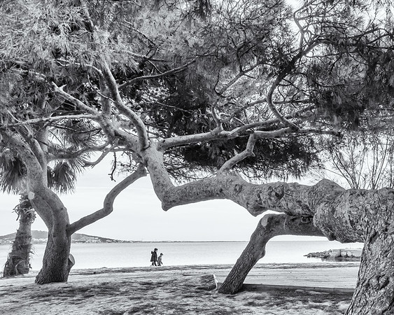 Trees bigger than people