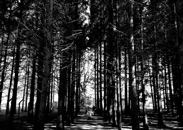 Trees and woodland