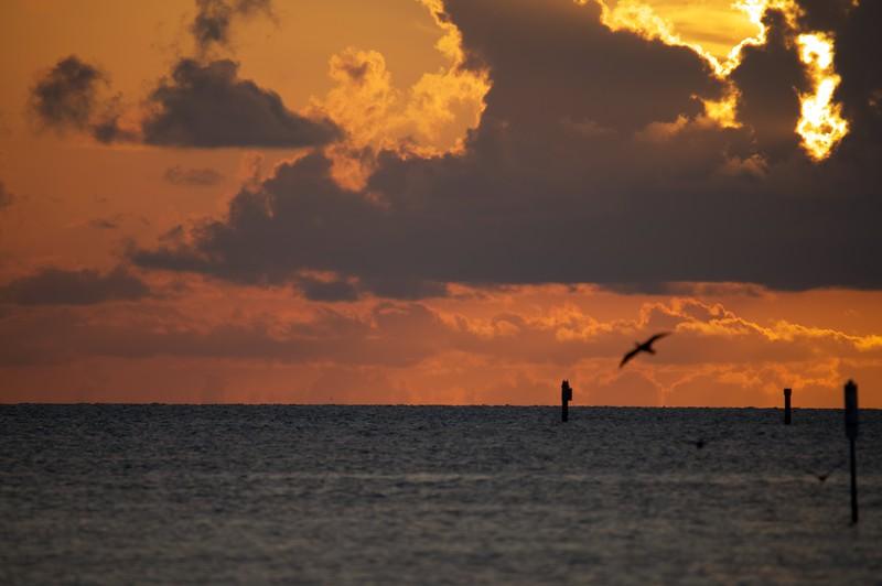 Cormorants At Sunrise