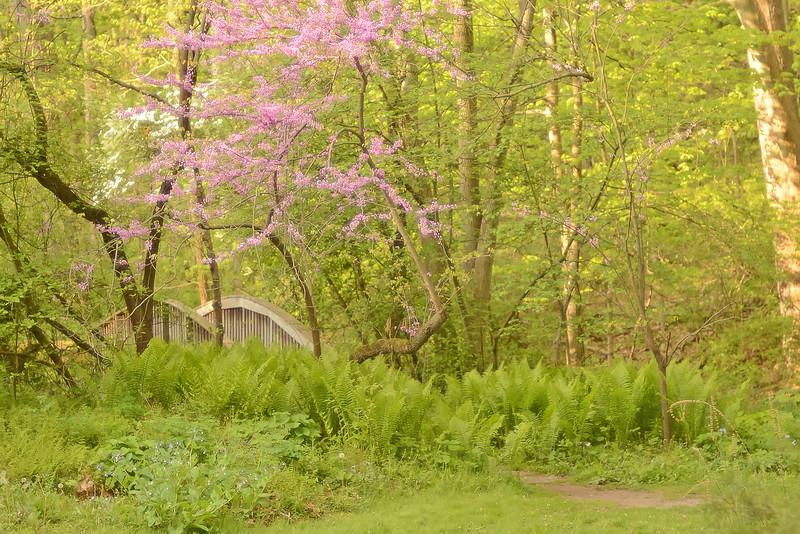 Bridge at Fernwood