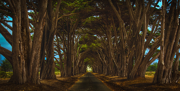 Tree Tunnel - near Point Reyes, CA