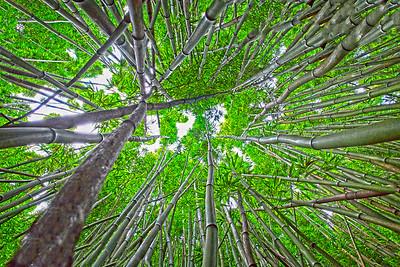 Maui's Bamboo Forest, at Ohe'o Gulch near Hana