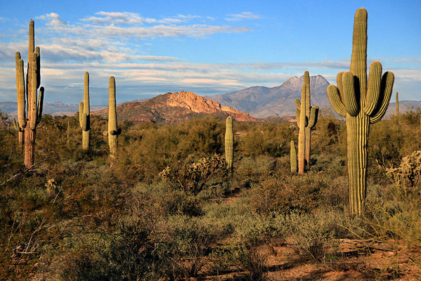 View of 4 peaks and majestic Saguaro from Treasure loop trail, Lost Dutchman State Park, Arizona