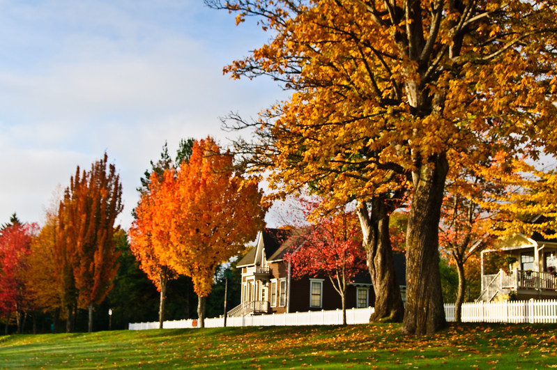 Trees in Port Gamble in early fall.