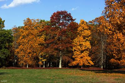 New England Foliage 2014