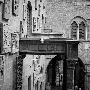 Art in Florance Photograph 9