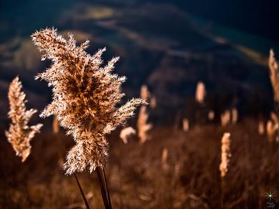Flower 1, Appennino