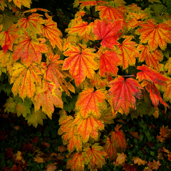 Colours of Autumn-02